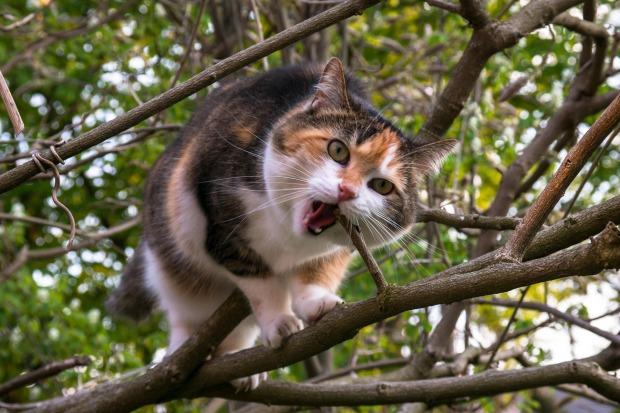 cat-736420_1920